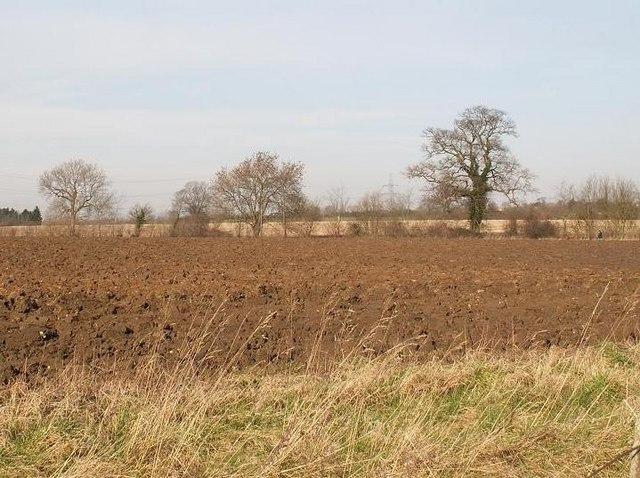Fields near Yaxley