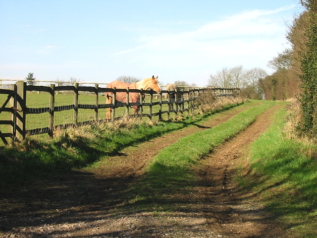Horses in paddock and track near Sixmile