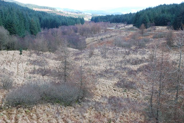Regenerating natural woodland
