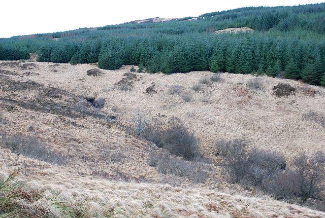 Forest on Druim Reidh