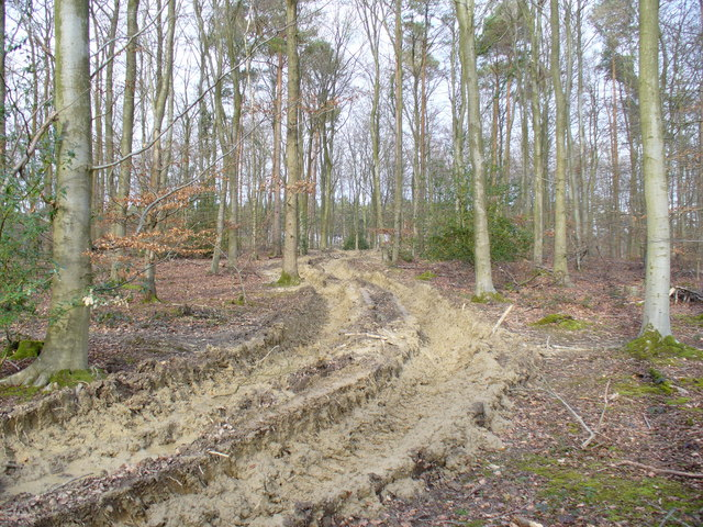 Forest Track, Footland Wood
