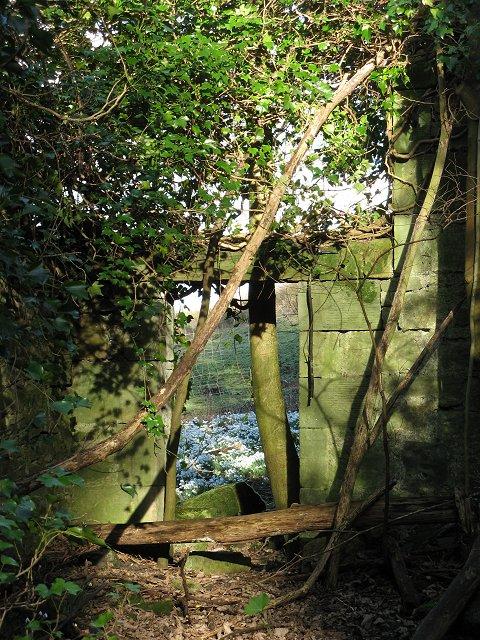 Ruin, Hopetoun Estate