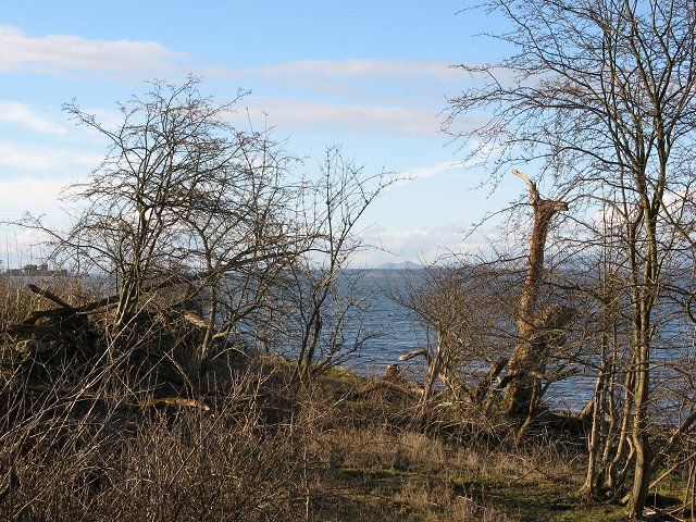Wester Shore Wood
