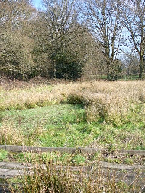 Rivulet by Woodland Farm