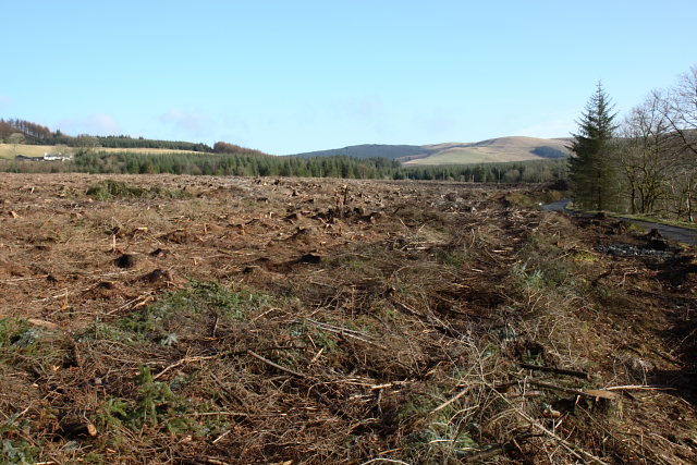 Clear felled forestry