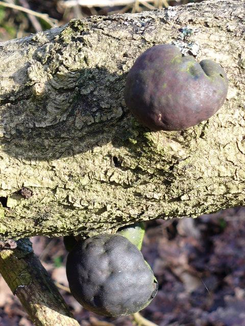 Fungi on Fallen Tree
