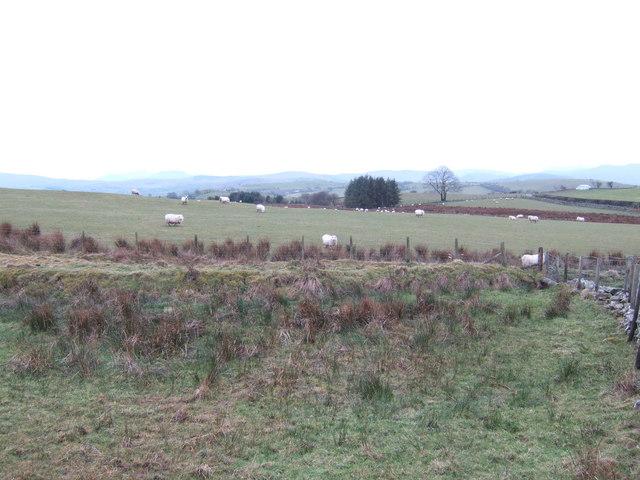 Pasture-moorland edge