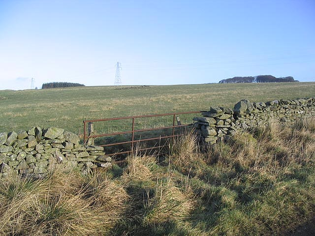 Gate and rough grazing field