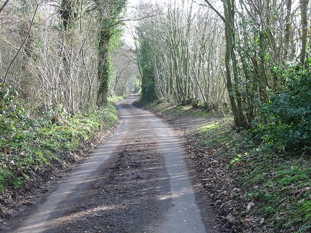 School Lane, in the woods