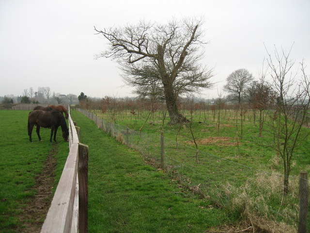 Newly-planted copse