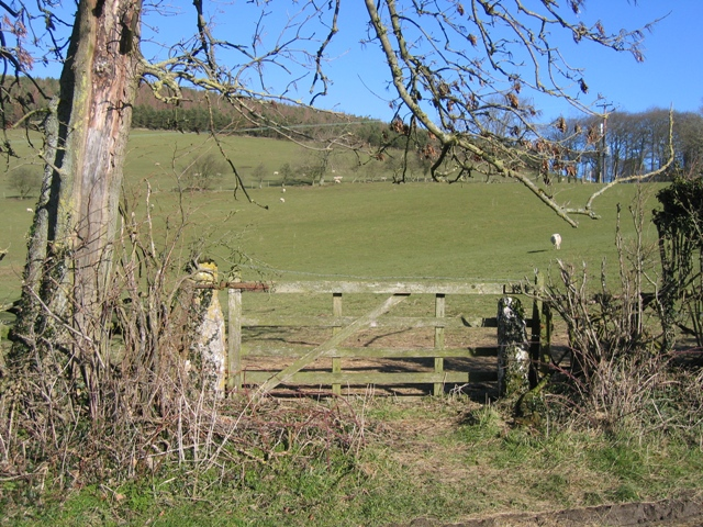 Field Gate below Moel yr Accre