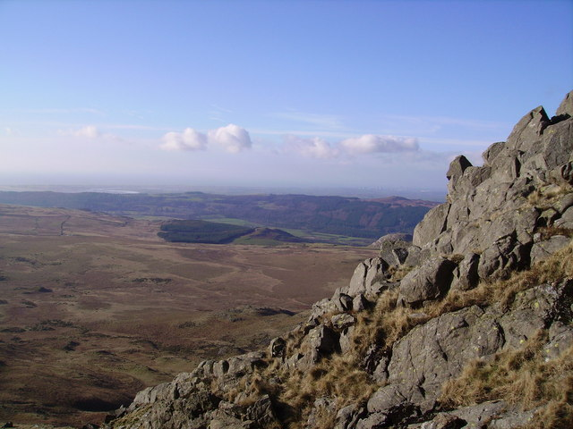 From White Pike