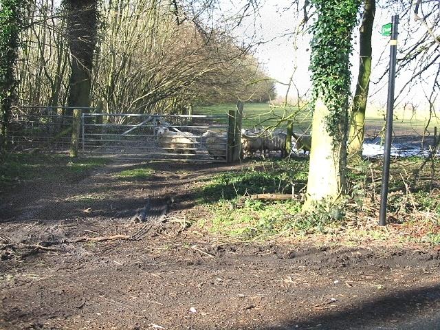 Gate and footpath through sheep field