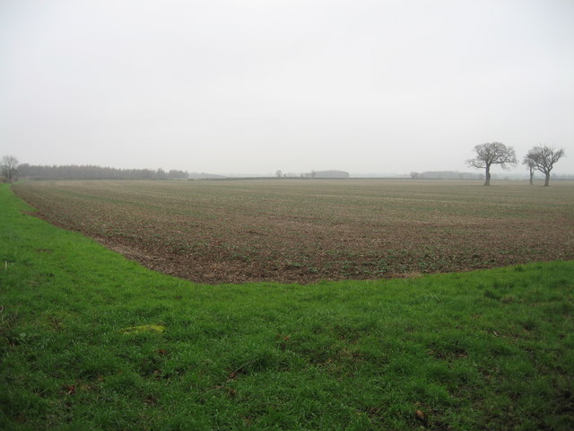 Arable field with isolated trees