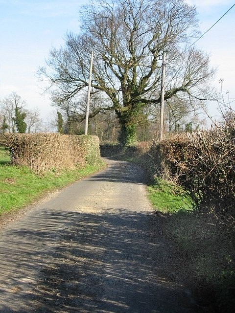Tree on Hogg Lane