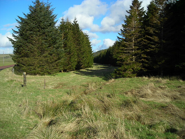 Gap in Conifer Forest