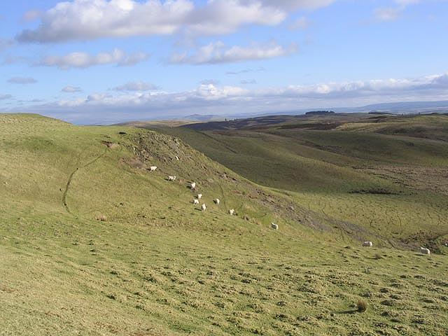 Sheep grazing at Alemoor Craig
