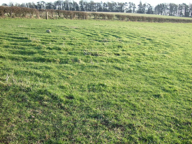 New turf labyrinth