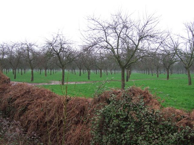 Orchard on Park Lane