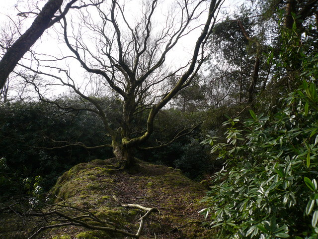 Bottom Moor - (Tree looking a little unusual)