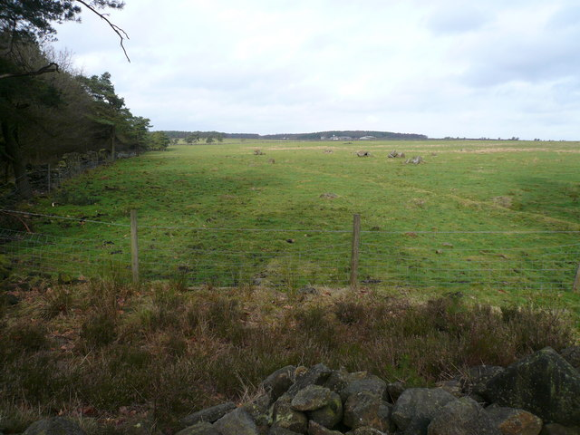 Bottom Moor - View across Middle Moor