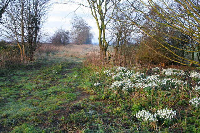 Snowdrops at the entrance to Welby Warren