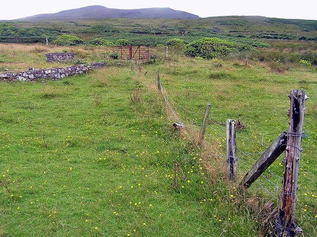 Gortantaoid, Islay