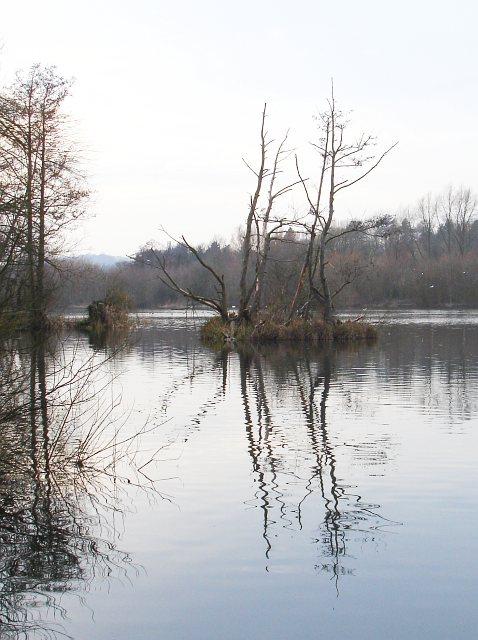 Small island, Chilham Lake