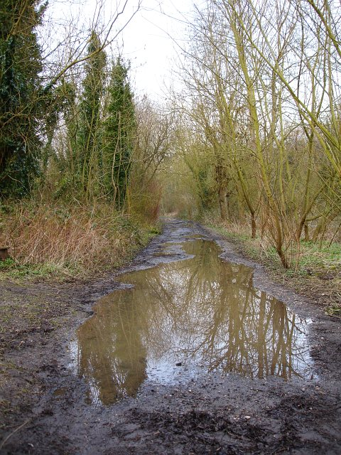 Track by Chilham Lake