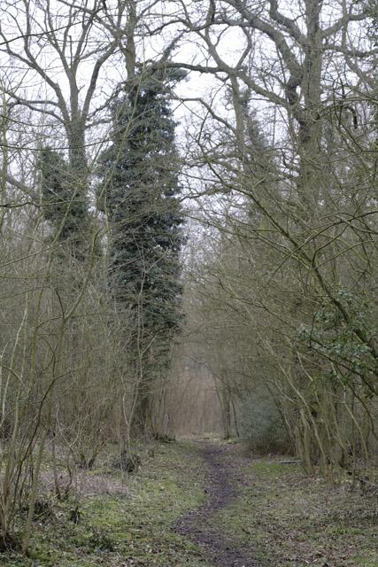 Buff Wood, East Hatley