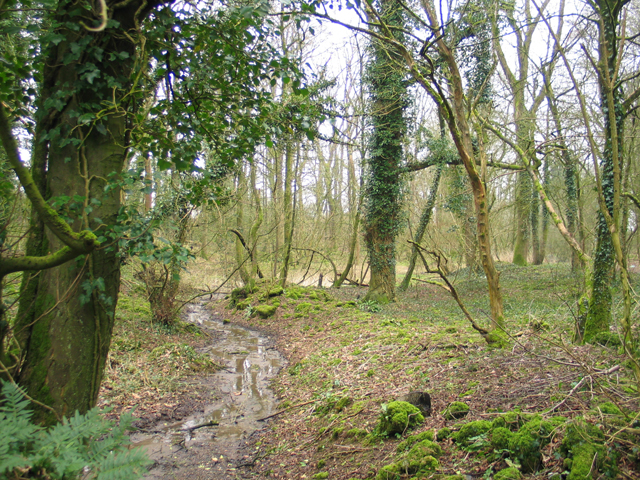 Pitts Wood