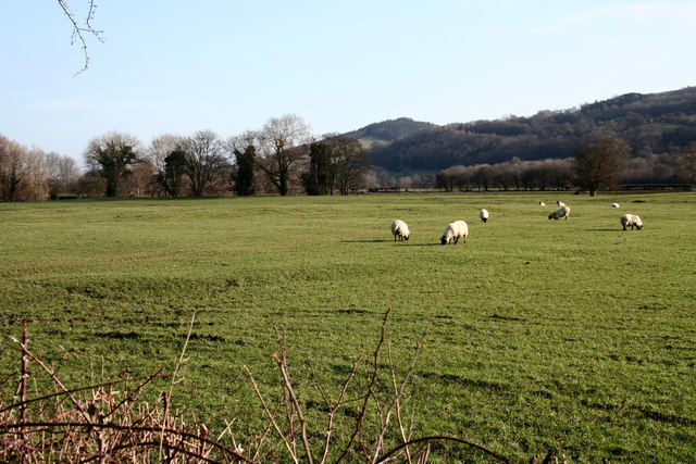 Pasture land in the Vyrnwy Valley