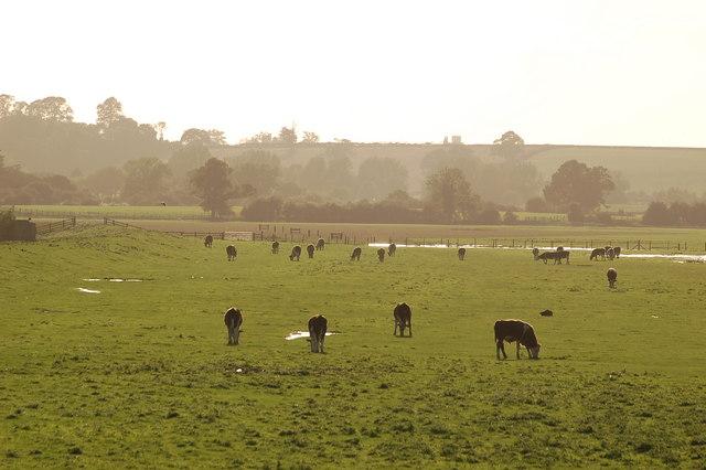 View across the Dumbles near Slimbridge