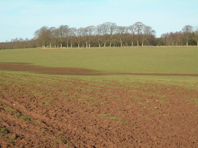 Farmland & edge of  wood