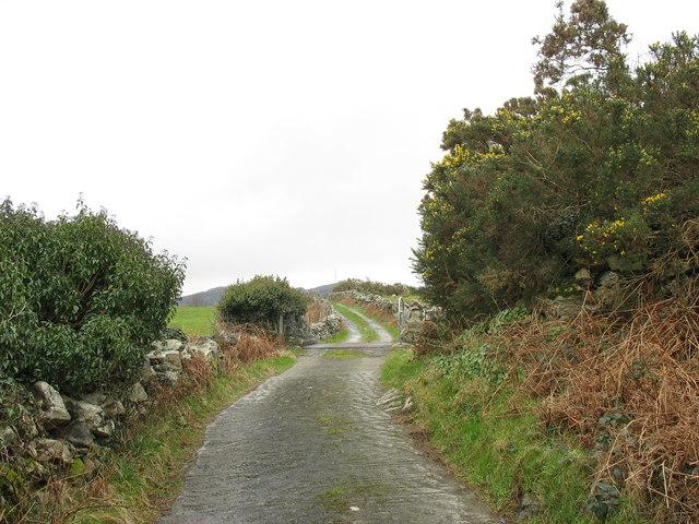 Cattle grid on the lane to Rhydau Duon