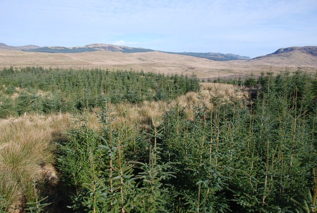 Forest giving way to moorland