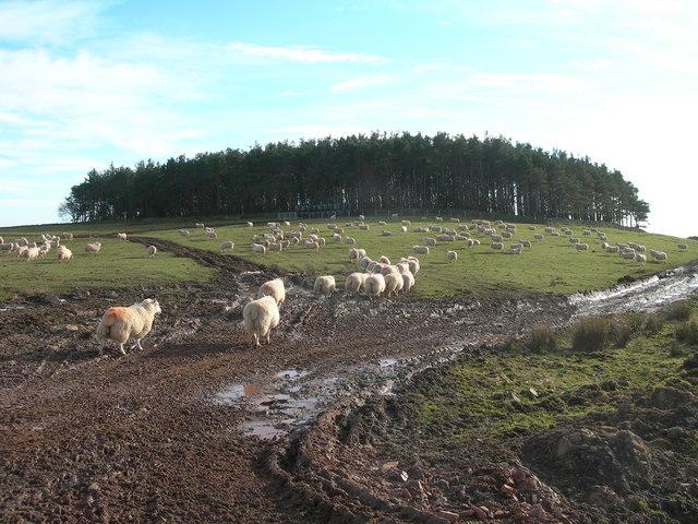 Pasture Land & Plantation