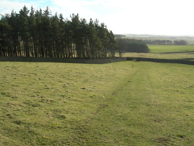 Plantation and Pasture Land
