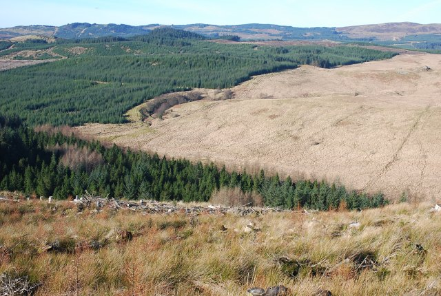 Forest and moorland boundary