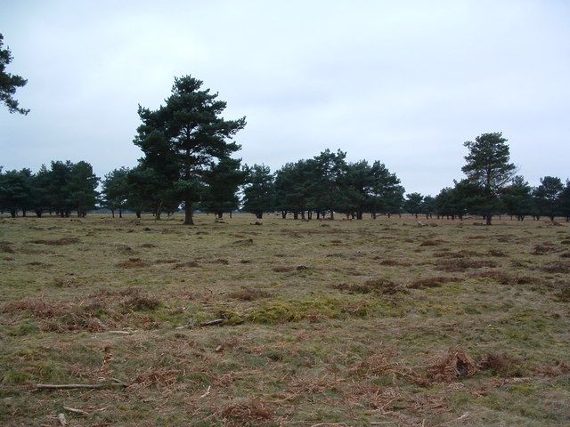 Lakenheath Warren