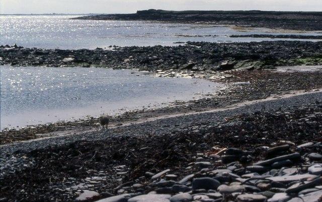 Bride's Ness beach, North Ronaldsay