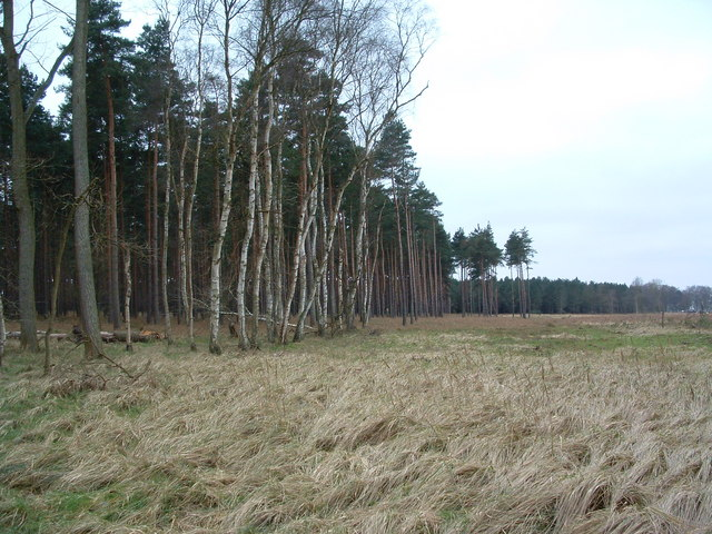 Belt Of Trees