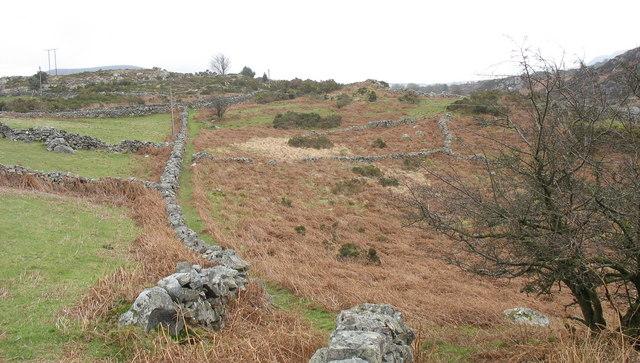 Bracken infested fields south-east of the path between Felin and Rhydau Duon