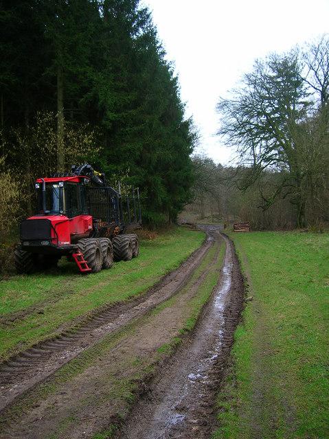 Logging, Linchball Wood