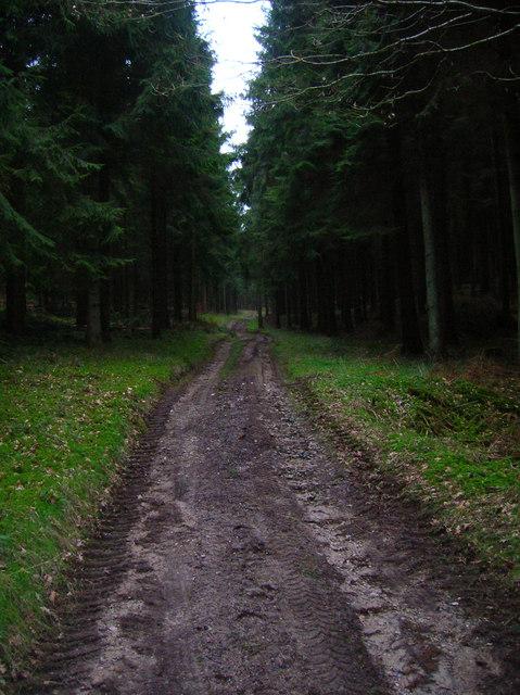 Bridleway, Linchball Wood