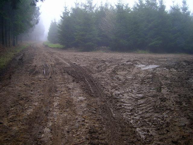 Newfarm Plantation
