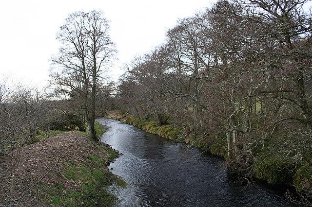 Riverside Alders upstream from Craigend Bridge.