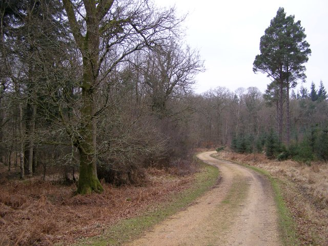 Track through Anderwood Inclosure, New Forest