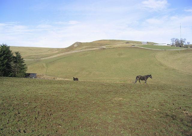 Horse field near New Headshaw