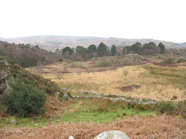 Bogland and forest south of Rhydau Duon